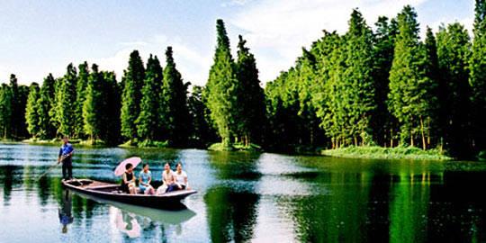 泰州兴化李中水上森林公园图片